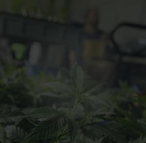 Anden-Cannabis-Man-Background