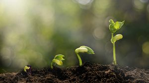 Career-Growth-Anden-Cannabis