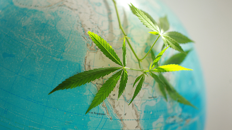 Here are the States and Countries with Marijuana Legalization