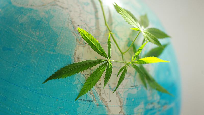 States Where You Can Home Grow Marijuana Legally