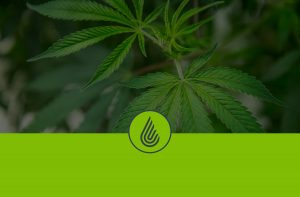 Anden-Header-Cannabis-Plant-Logo