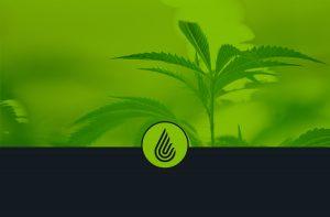 Anden-Cannabis-Logo-Cultivation