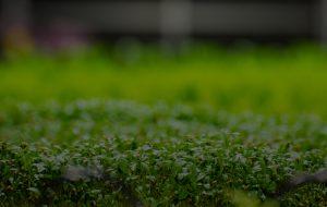 Anden-Background-Grow Room