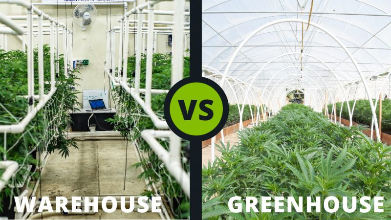 Growing Cannabis: Warehouse vs. Greenhouse?