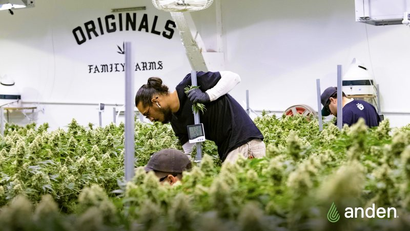 The top 7 things to know about setting up your grow operation