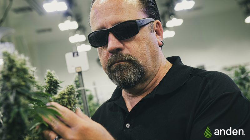 Your Grow and Humidity Control: Q&A with Anden Senior Applications Engineer Randy Lenz