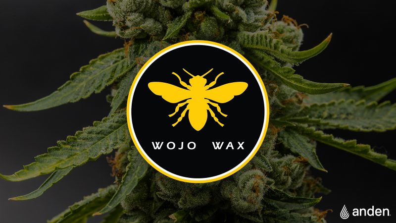 Choosing the Right Strains for Your Grow Space with Tyler Wejrowski of Wojo Wax